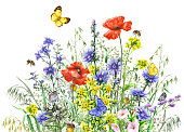 Hand drawn wild flowers and insects. Watercolor  wildflowers bunch, flying butterflies and bees isolated on white.