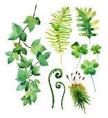 Watercolor wild leaves set isolated on white background.  Woods leaves, moss, ivy branch and clover. Watercolor natural wildlife set. Hand painted forest elements illustration