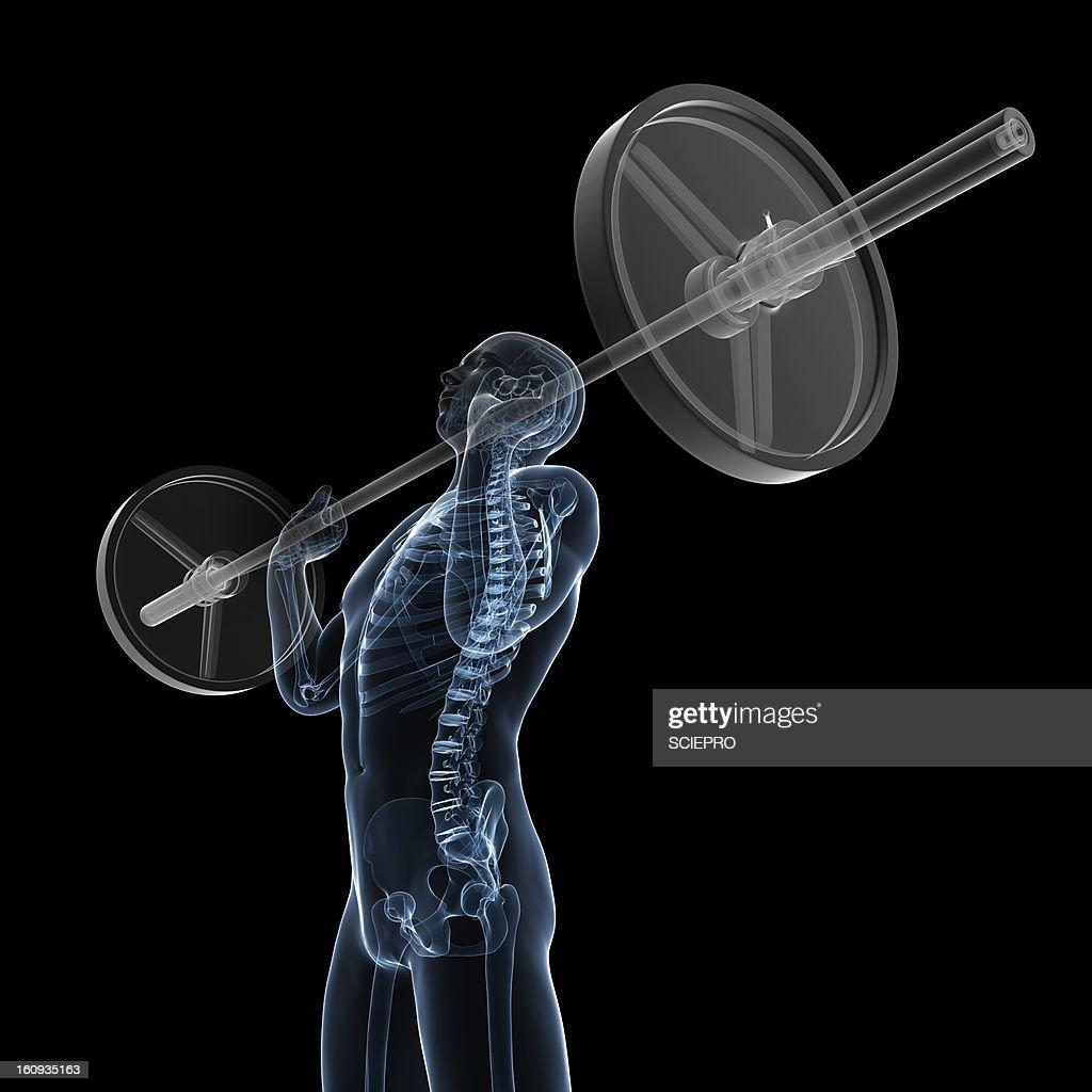 Weightlifter, artwork : Stock Illustration