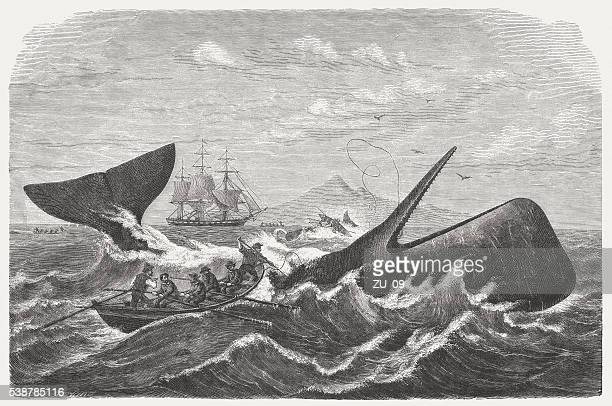 Whalers in action wood engraving published in 1855 stock illustration - Whaling Stock Illustrations And Cartoons Getty Images