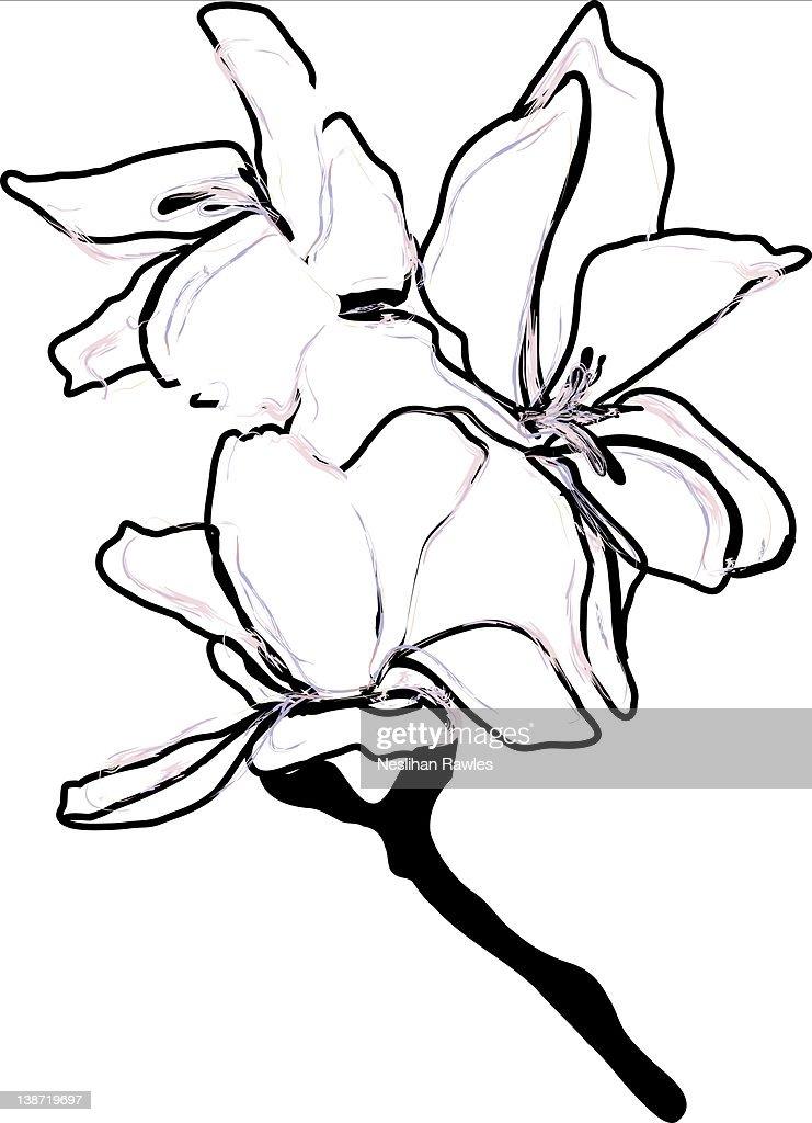 White flower : Stock Illustration