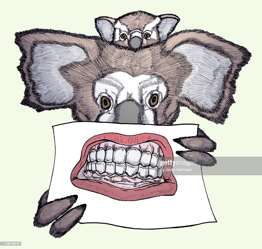 Wild koala : Stock Illustration