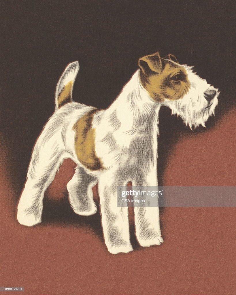 Wire Fox Terrier : Stock Illustration