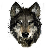 Wolf hand painted. watercolor illustration