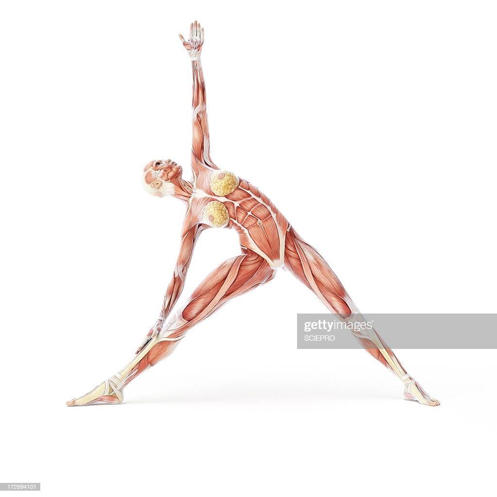 Yoga, artwork : Stock Illustration