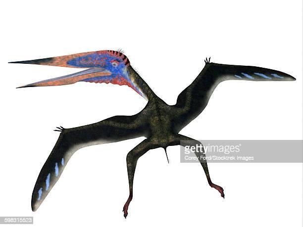 Zhejiangopterus pterosaur.