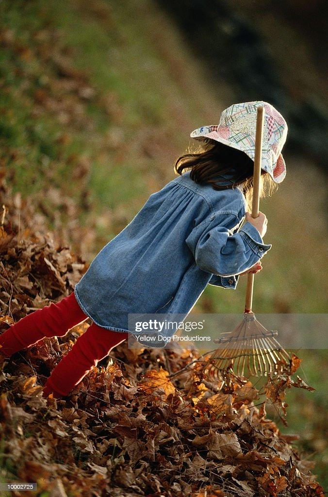 YOUNG GIRL IN HAT RAKING AUTUMN LEAVES : Bildbanksbilder