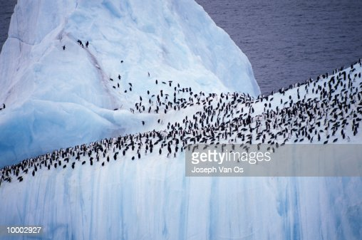 OVERVIEW OF PENGUINS ON ICEBERG : Stock Photo
