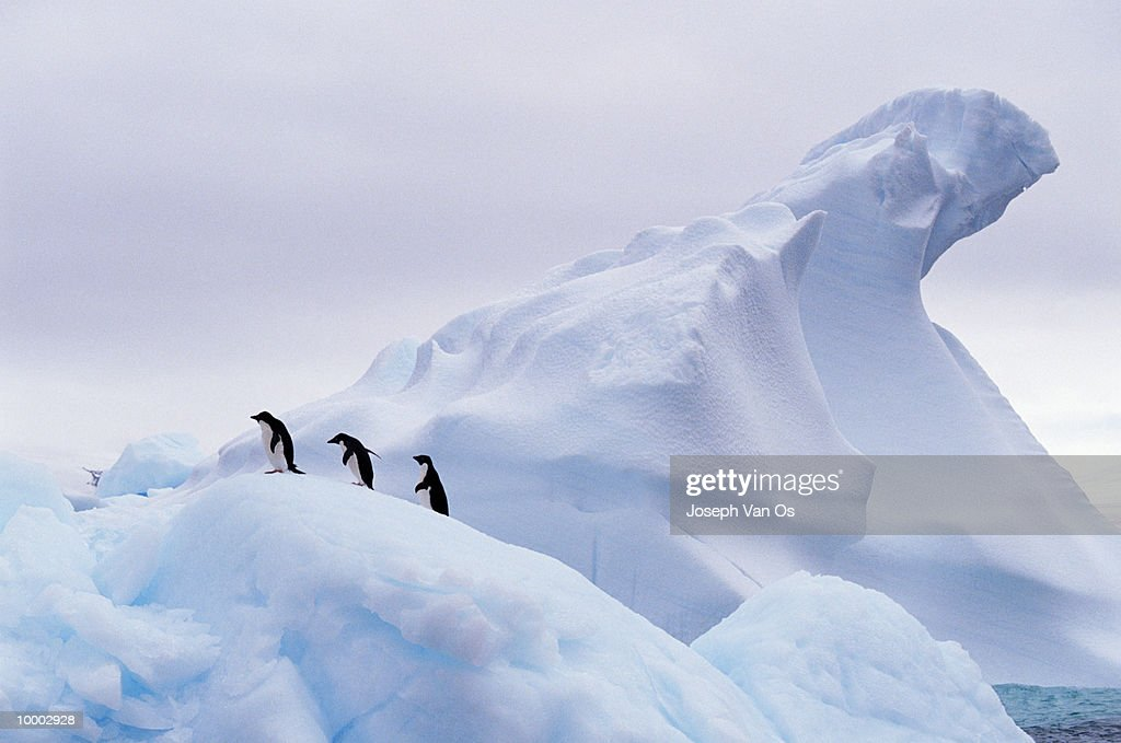 OVERVIEW OF THREE PENGUINS ON AN ICEBERG : Stock Photo