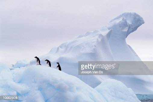 OVERVIEW OF THREE PENGUINS ON AN ICEBERG : ストックフォト