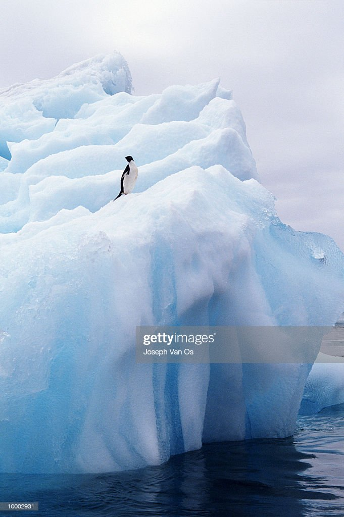 PENGUIN ON ICEBERG : Stock Photo