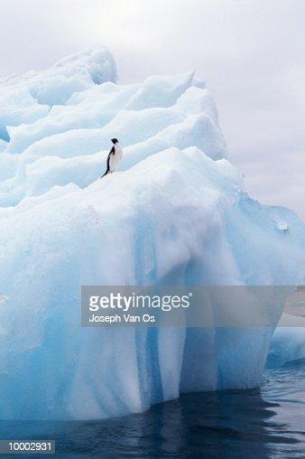 PENGUIN ON ICEBERG : Stockfoto
