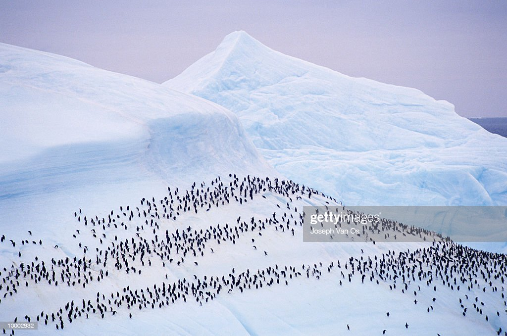OVERVIEW OF PENGUINS ON A GLACIER : Stock-Foto