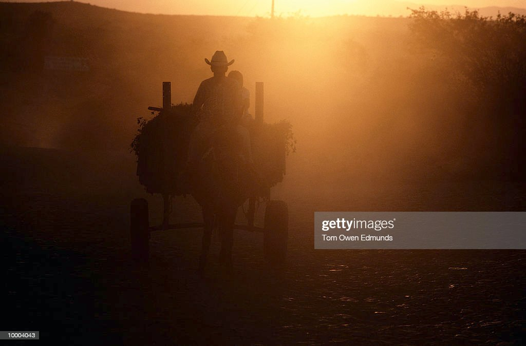 HORSE & CART IN SUNLIGHT IN MEXICO : Stock Photo