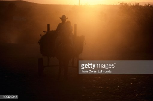 HORSE & CART IN SUNLIGHT IN MEXICO : Stock-Foto