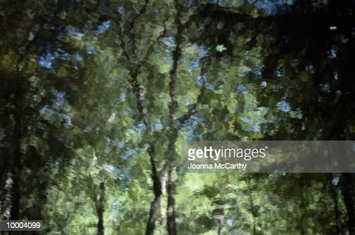 REFLECTION OF LEAFY TREES IN WATER : Stock Photo
