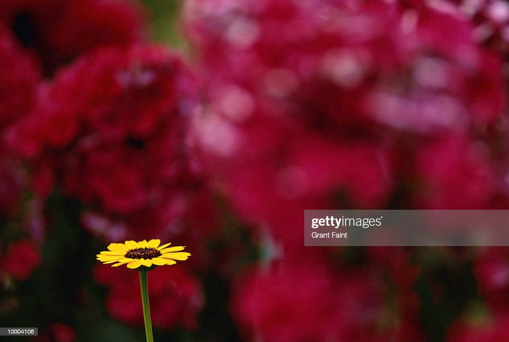 C. MONET'S GARDEN IN GIVERNY, FRANCE : Stock Photo