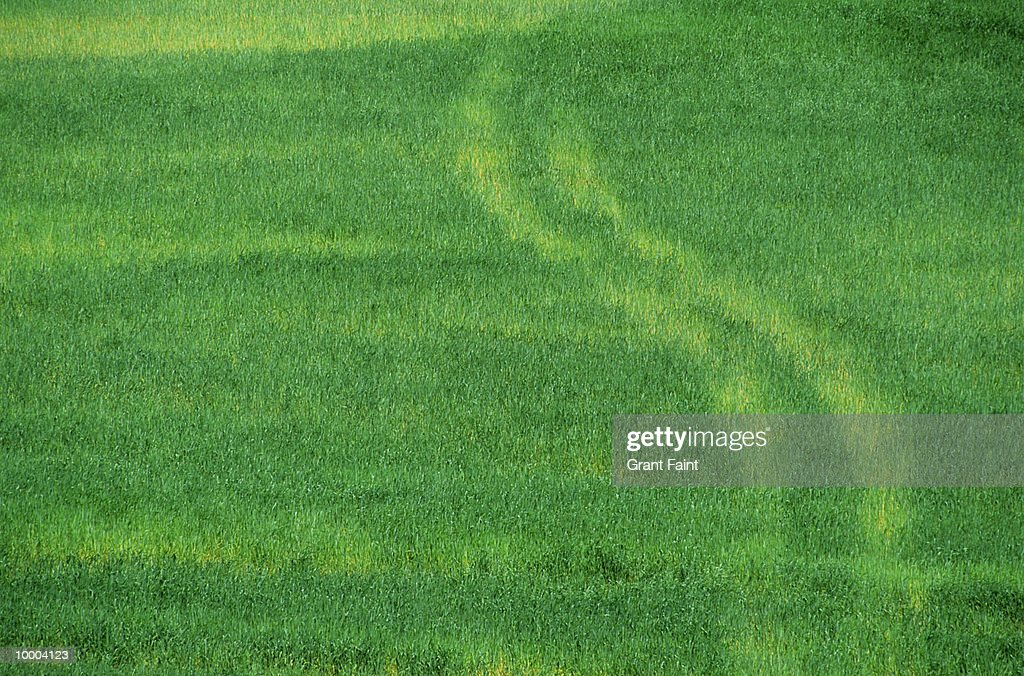 TIRE TRACKS THROUGH GREEN FIELD IN BELGIUM : Stock Photo