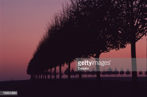 SILHOUETTE OF LINE OF TREES AT DUSK : Stock Photo