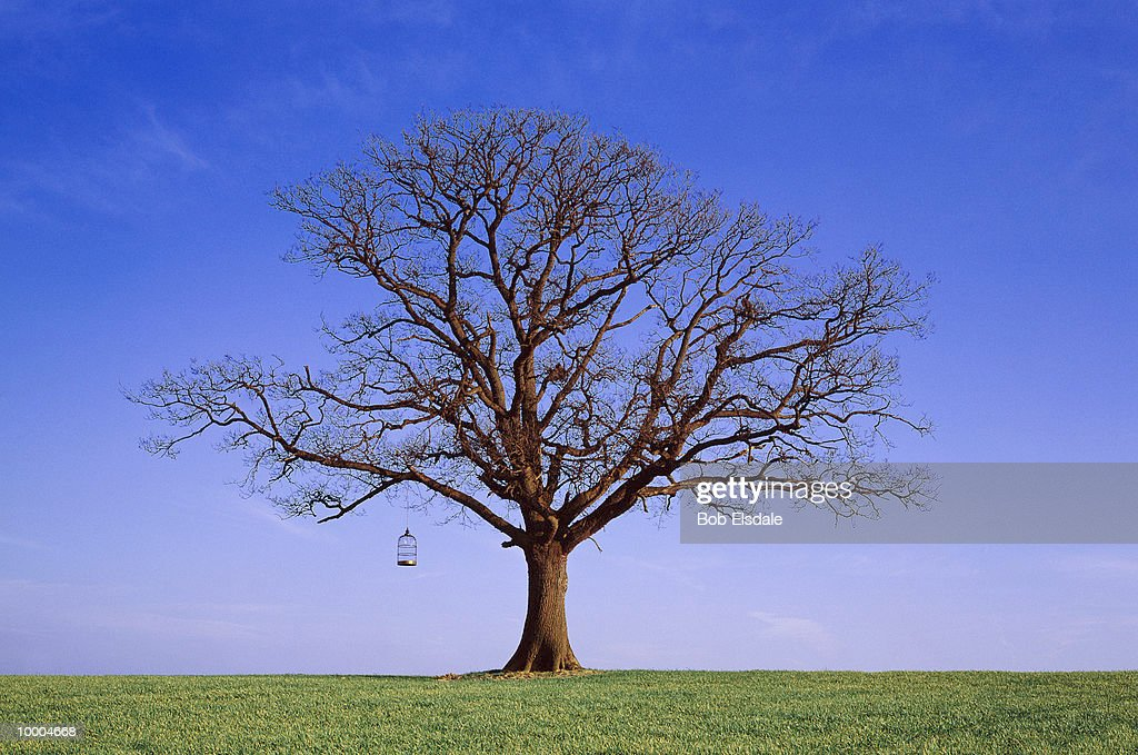 BARE TREE WITH BIRD CAGE IN SURREY, ENGLAND : Stockfoto