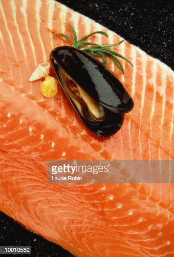 MUSSEL & SHELLS ON SALMON FILLET : Stock Photo