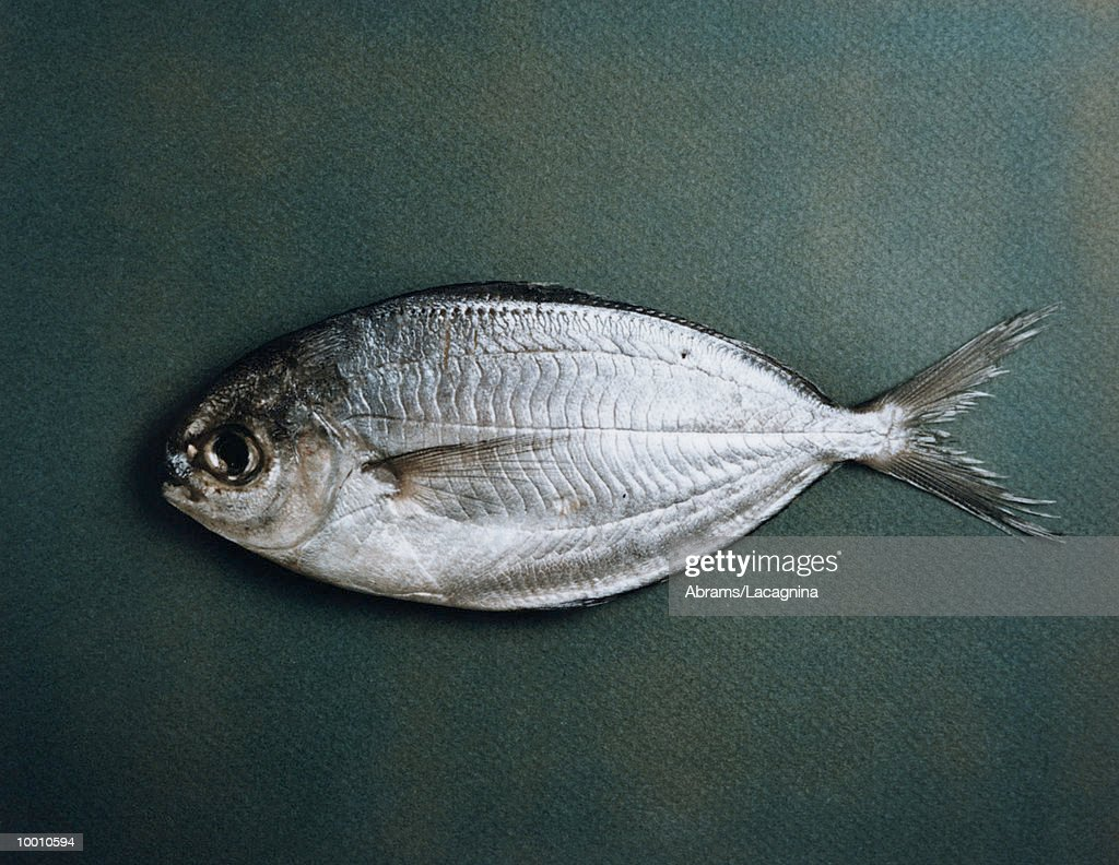 FISH ON GREEN BACKGROUND : Stock Photo