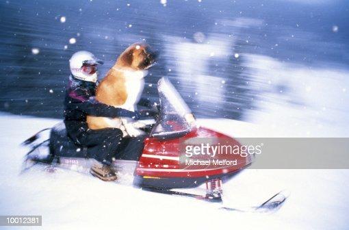 RIDER & DOG ON SNOWMOBILE IN COLORADO IN BLUR : Foto de stock