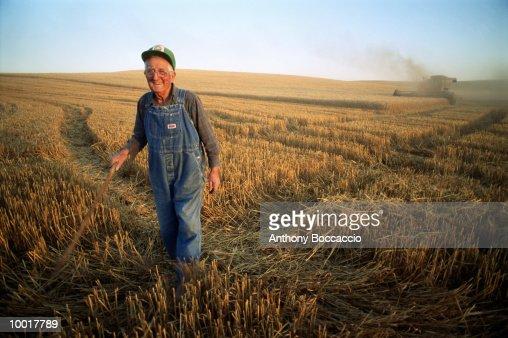 ELDERLY FARMER IN WHEAT FIELD IN WASHINGTON : Stockfoto