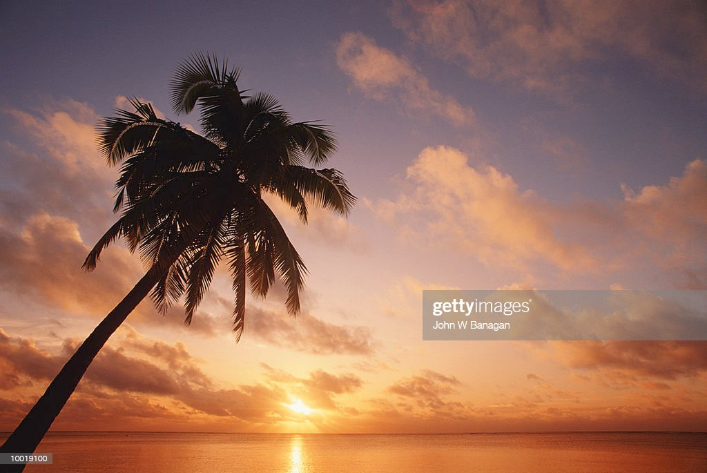 COCONUT TREE AT AITUTAKI IN THE COOK ISLES IN POLYNESIA : Stock Photo