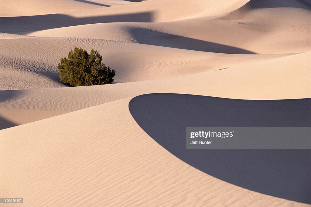 SAND DUNES AT DEATH VALLEY NATIONAL MONUMENT IN CALIFORNIA : Stockfoto