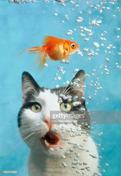 CAT WITH GOLDFISH