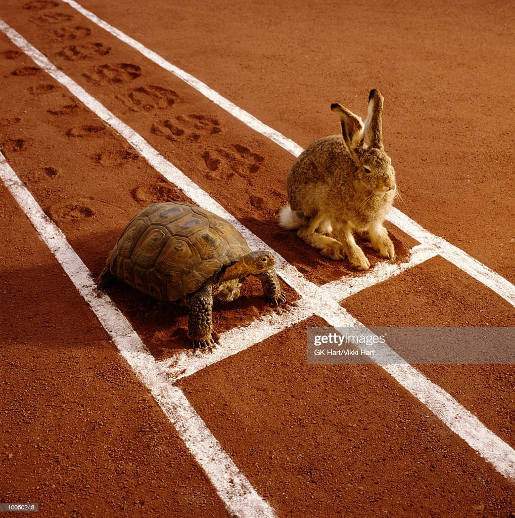 TORTOISE AND HARE ON TRACK : Stock Photo