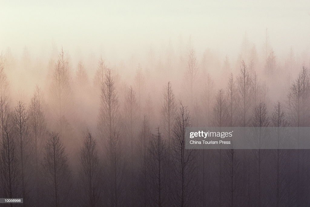 FOREST BY DONGTING LAKE, HUNAN PROVINCE, PEOPLES REPUBLIC OF CHINA : Stock Photo
