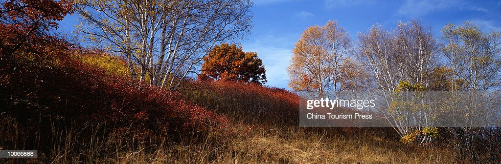 MULAN HUNTING GROUND, HEBEI PROVINCE, PEOPLES REPUBLIC OF CHINA : Stock-Foto