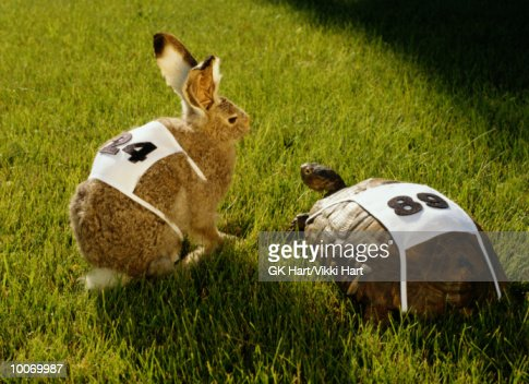 HARE & TORTOISE WITH RACE NUMBERS ON GRASS