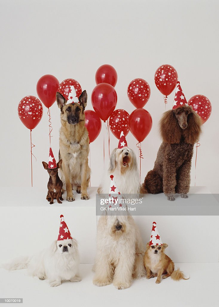 PARTY DOGS : Stock Photo