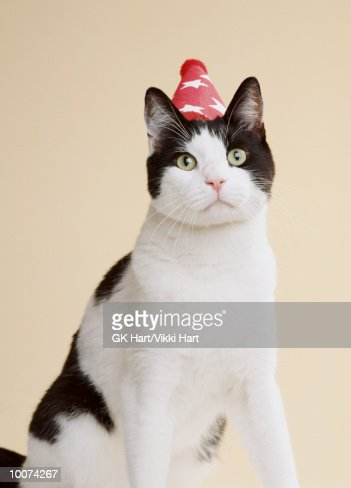 BLACK AND WHITE PARTY CAT : Stock Photo