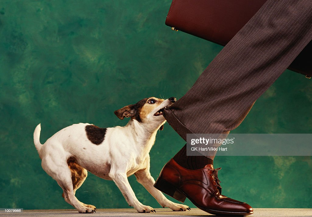 DOG 'NIPPING AT YOUR HEELS'