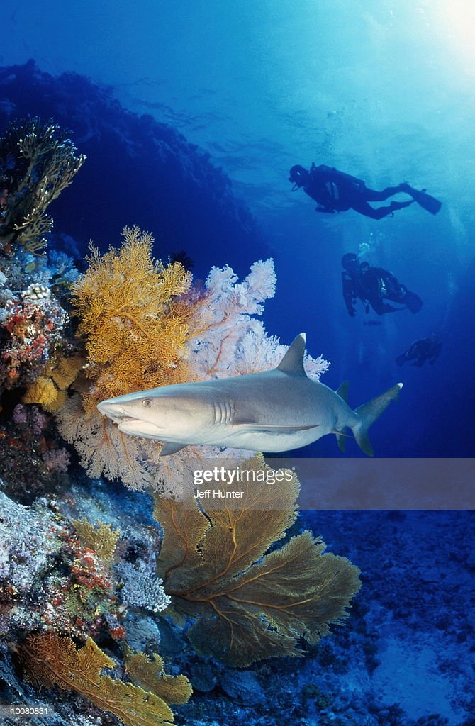 GREAT BARRIER REEF IN THE CORAL SEA IN AUSTRALIA : Stock Photo