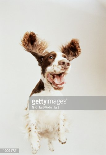 SPRINGER : Stock Photo