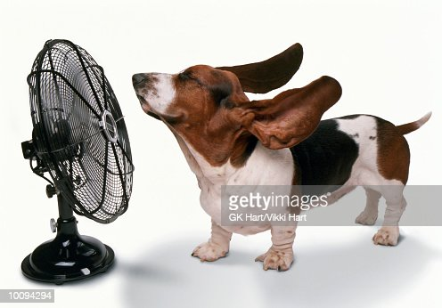 HAPPY DOG STAYING COOL BEING BLOWN AWAY BY FAN : Foto de stock