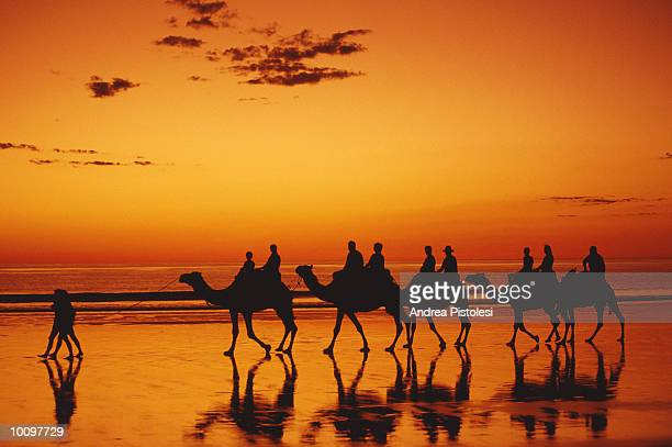 CAMELS ON CABLE BEACH, KIMBERLEY, AUSTRALIA
