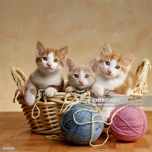 3 KITTENS IN BASKET WITH YARN