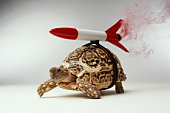 TORTOISE WITH ROCKET