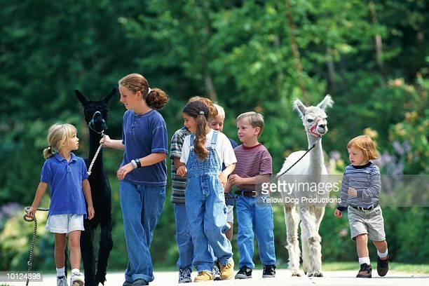 KIDS WALKING ALPACAS