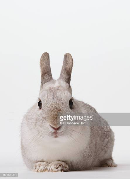 WHITE BUNNY FRONT VIEW