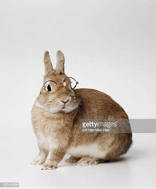 BROWN BUNNY WITH GLASSES