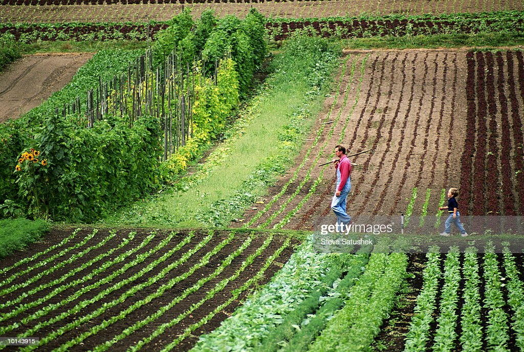 ORGANIC VEGETABLE FARM, WHATCOM COUNTY, WASHINGTON, FATHER AND SON : Stock Photo