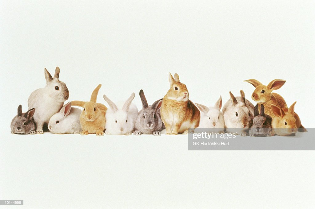 LOTZA BUNNIES IN A ROW