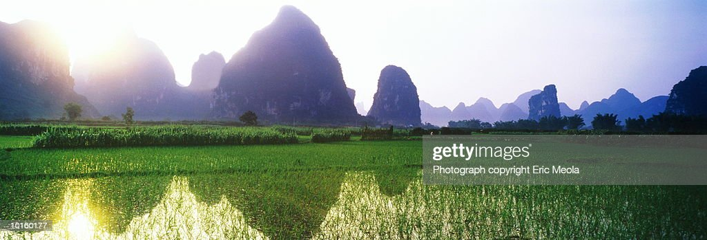 RICE FIELD, GUILIN, CHINA : Stock Photo